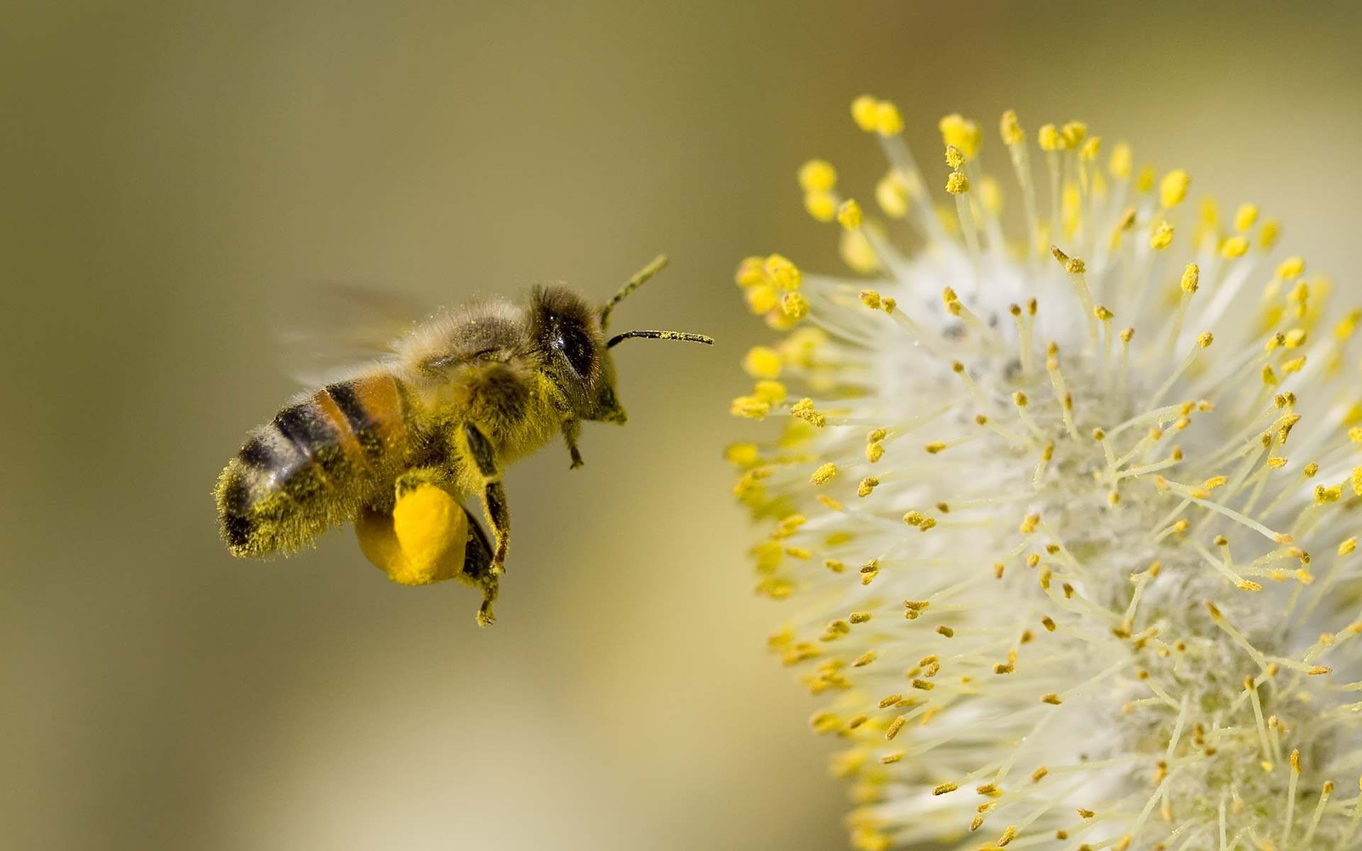 Bees And Natural Gas